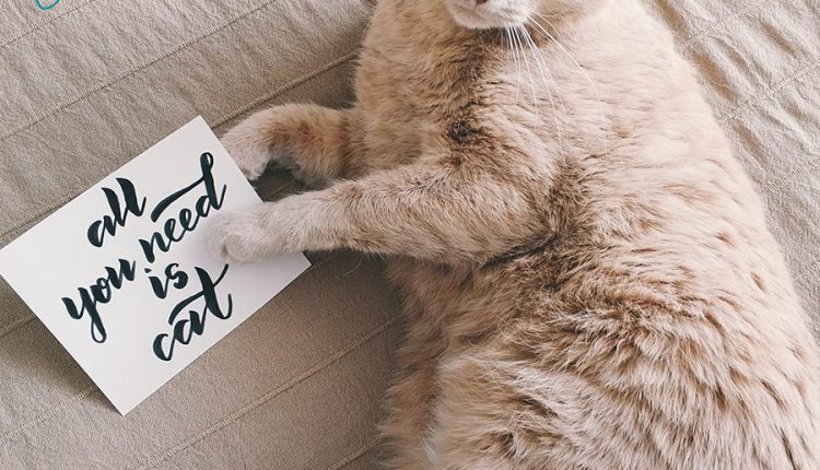 good-morning-all-you-need-is-cat