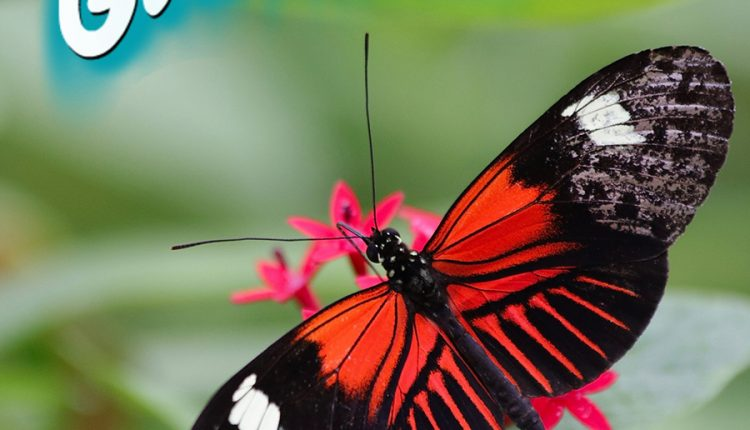 good-morning-beautiful-butterfly