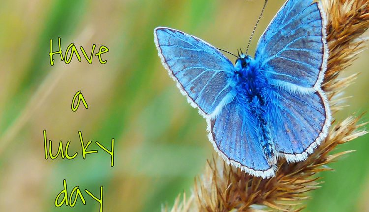 good-morning-blue-butterfly