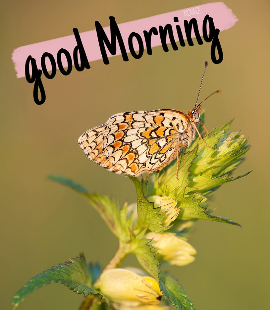 Good morning image with butterfly in sunshine