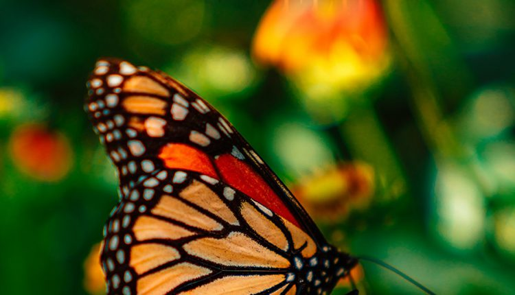 good-morning-butterfly-and-flowers