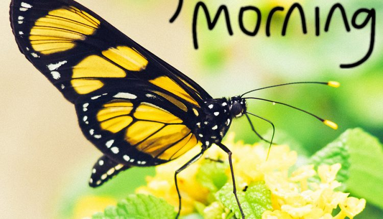 good-morning-butterfly-image