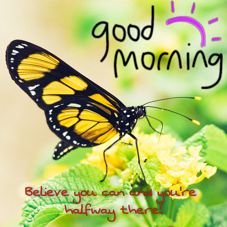 Good morning butterfly photo design