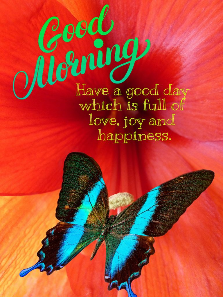 Good morning image butterfly with joyful