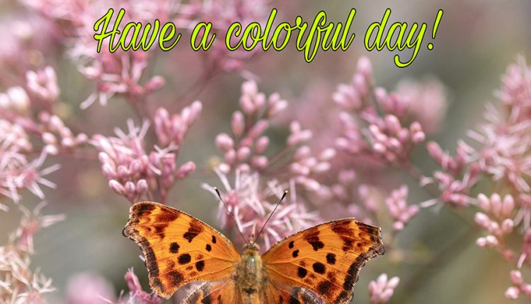 good-morning-butterfly-wish