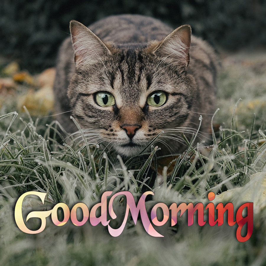 Good morning image with a lurking cat