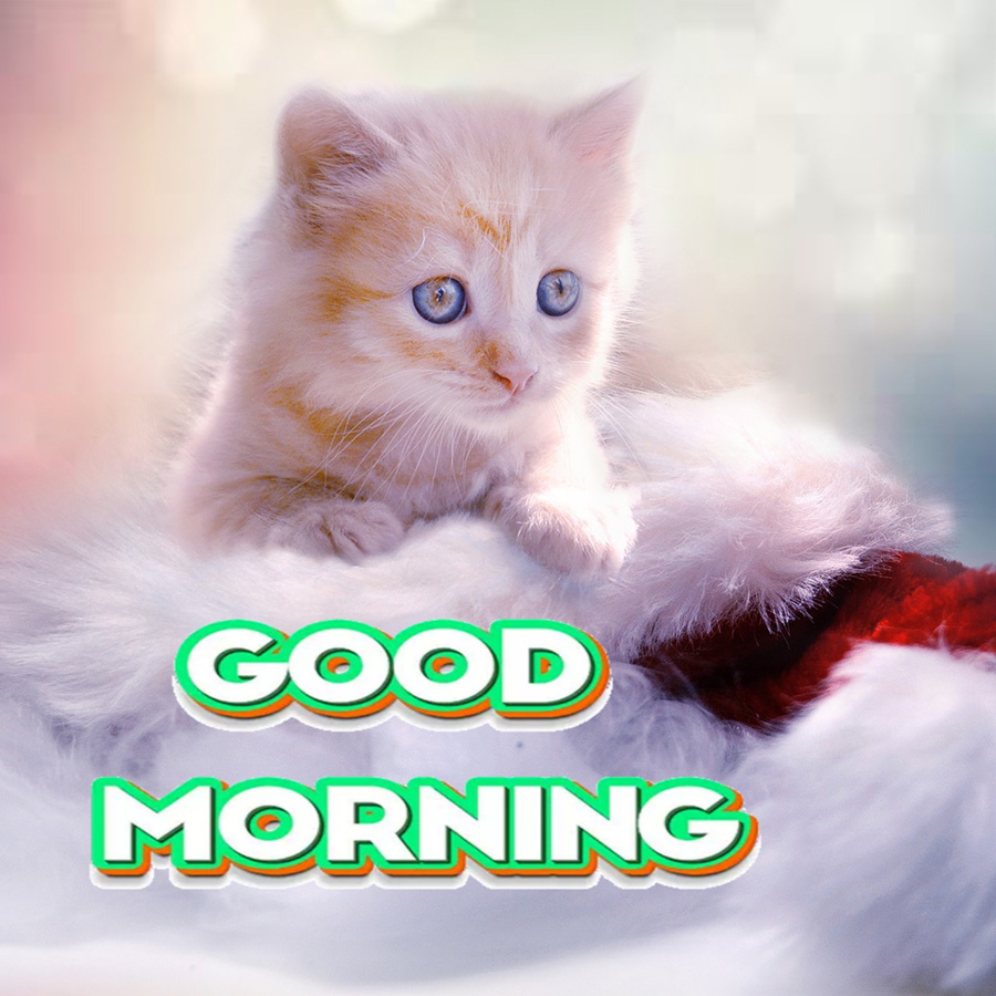 good morning images with baby cat