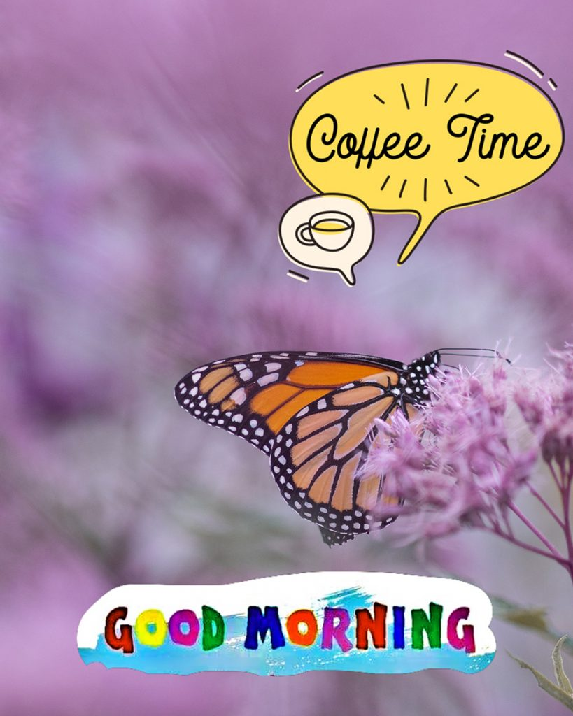 Good morning image with orange butterfly and purple flower