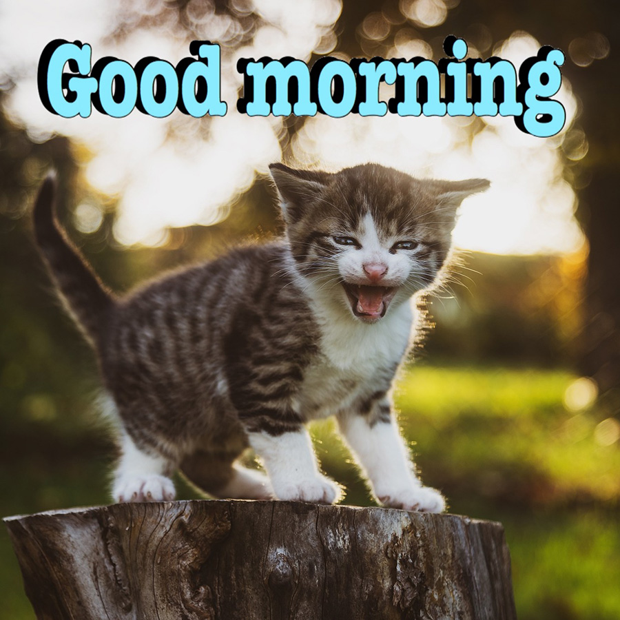 Good morning image with cat standing on a log