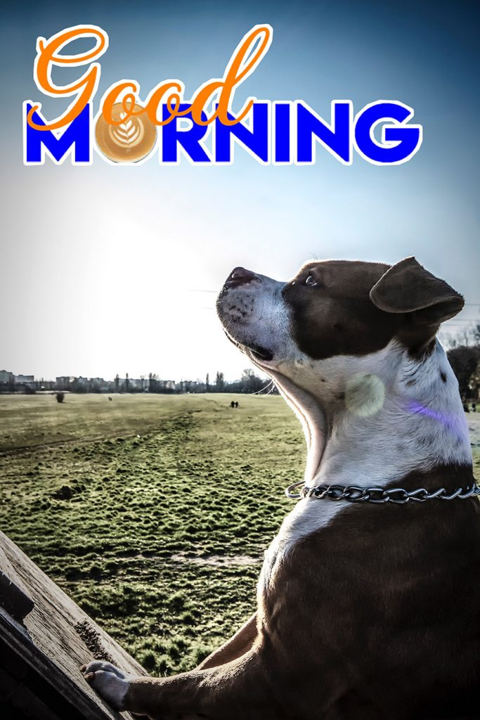 Good morning image with strong dog