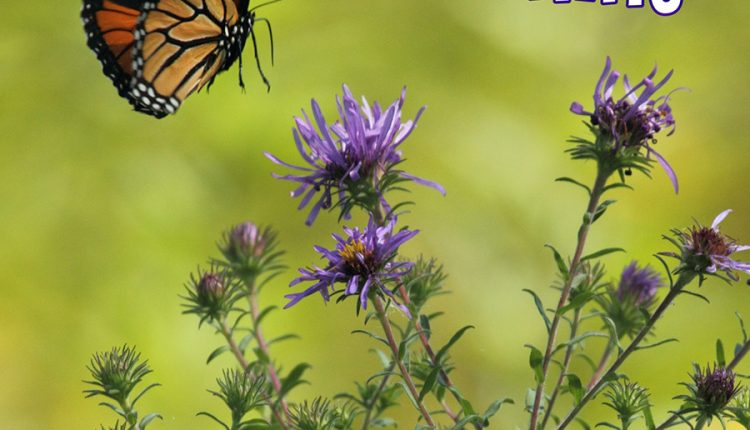 good-morning-flowers-and-butterfly
