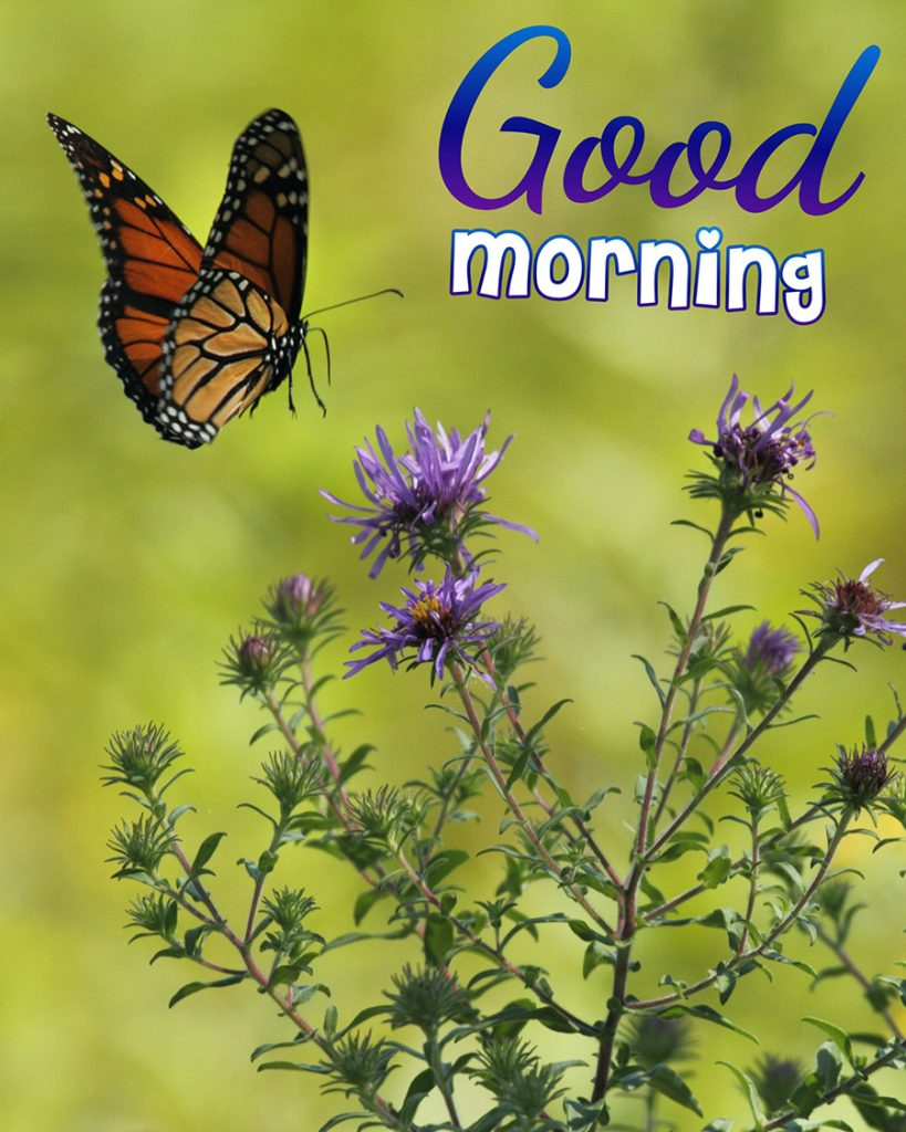 Good morning image with butterfly are flying over the flowers