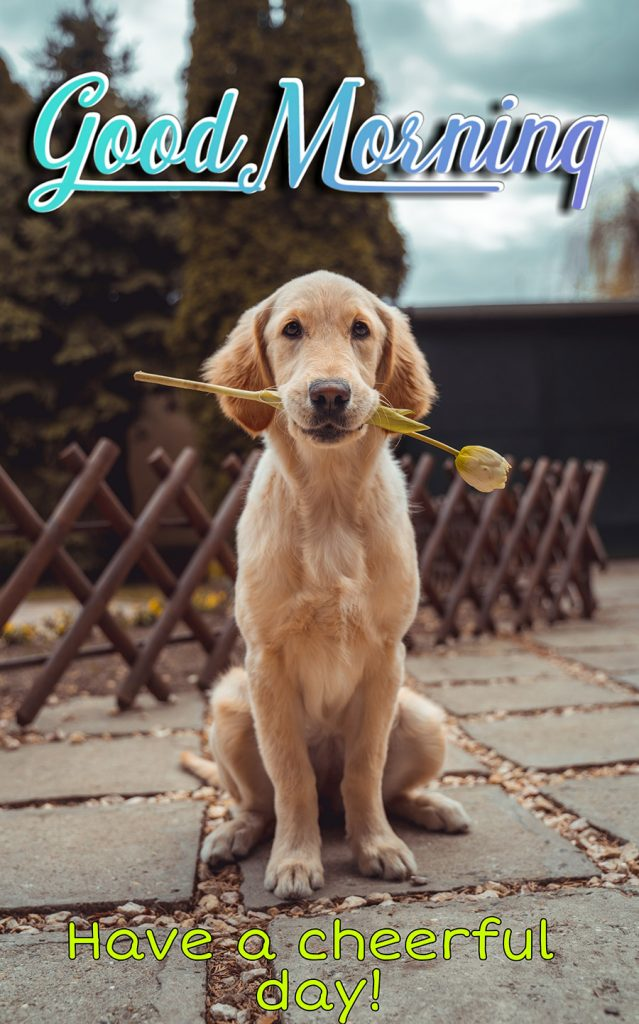 Good morning image with golden retriever dog