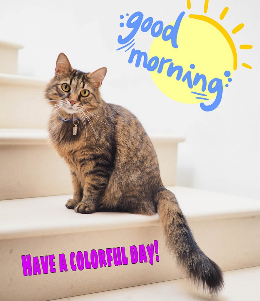 Good morning image with cat sitting on the steps