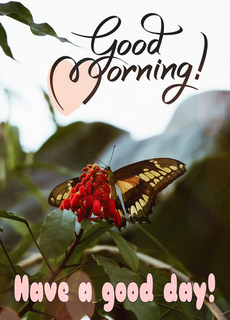 Good morning image with butterfly in red flower