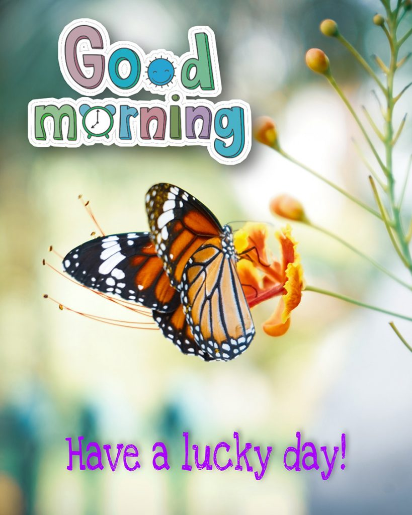 Good morning pic with orange butterfly and flower
