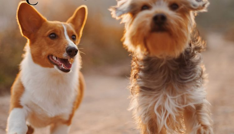 good-morning-image-with-happy-dogs