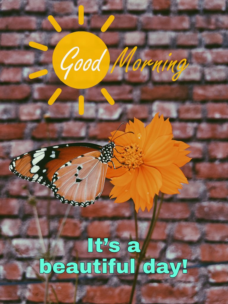 Top of good morning butterfly photo