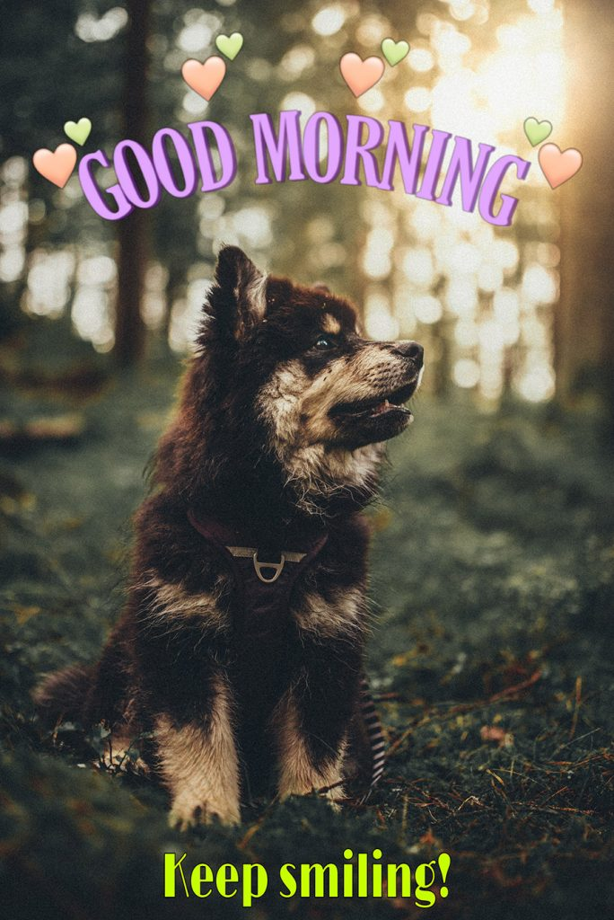 Good morning image with the dog in the forest
