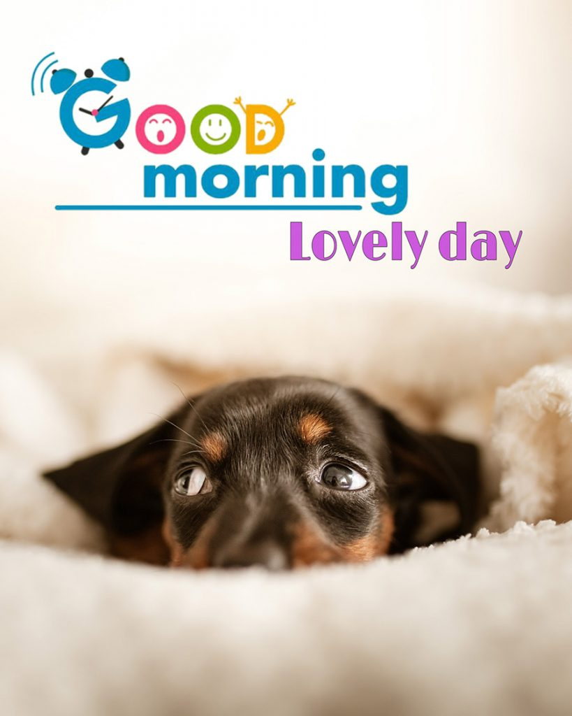 Good morning image with cute dog lying on a blanket