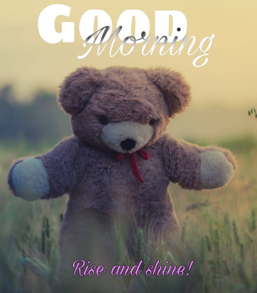 Good morning image with Teddy bear walking in the grass field