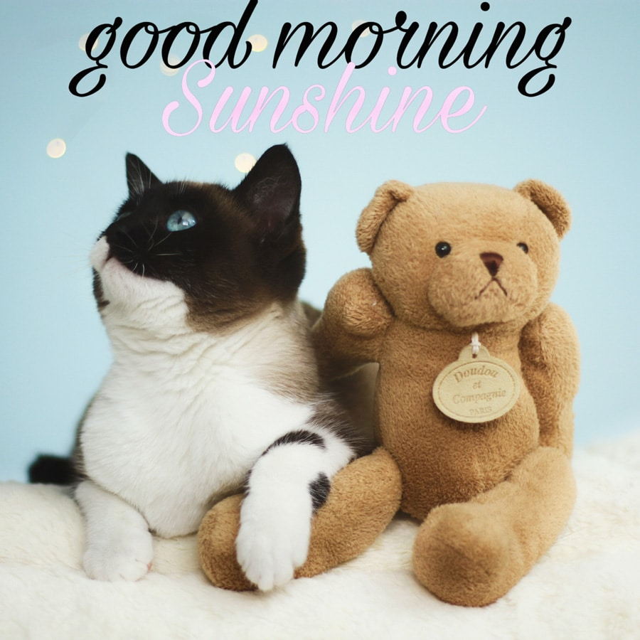 Good morning image with teddy bear and cat