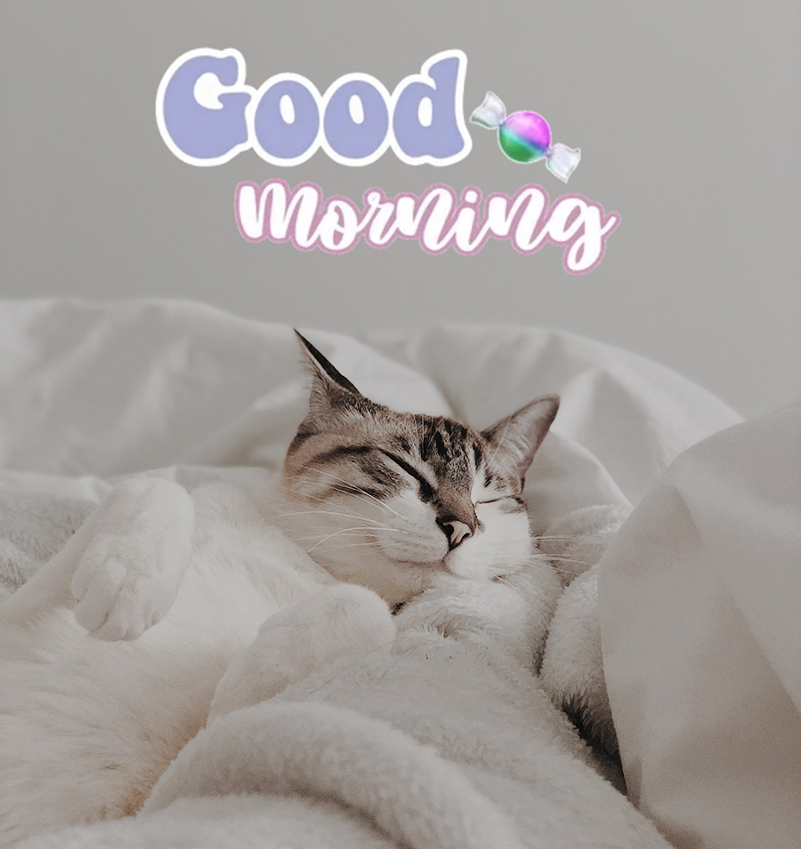 Good morning image with lazy cat