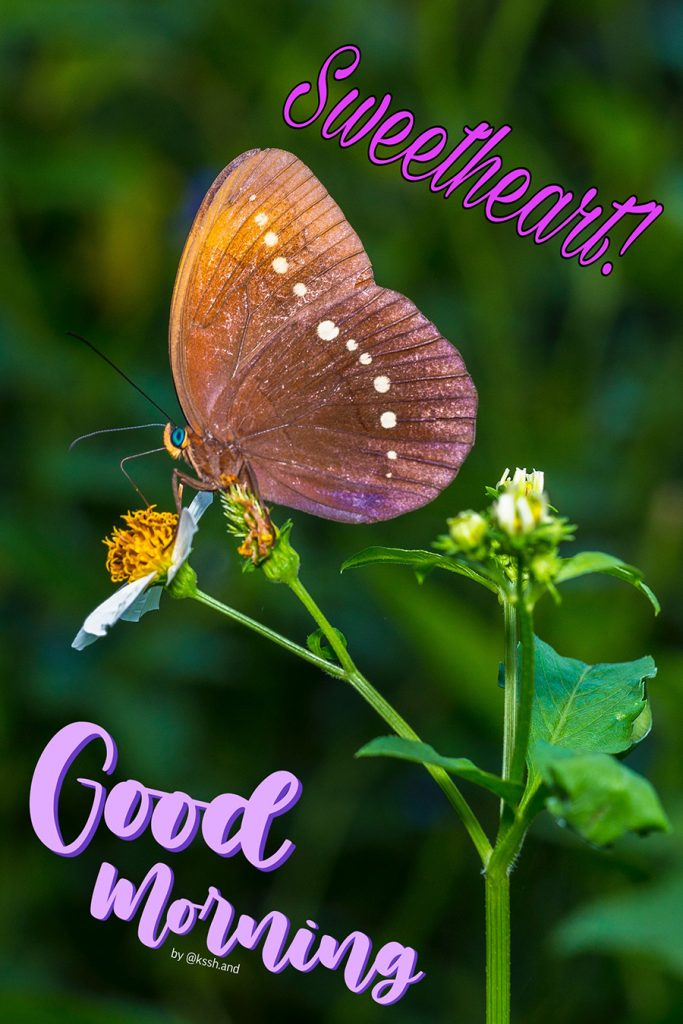Amazing good morning butterfly pic