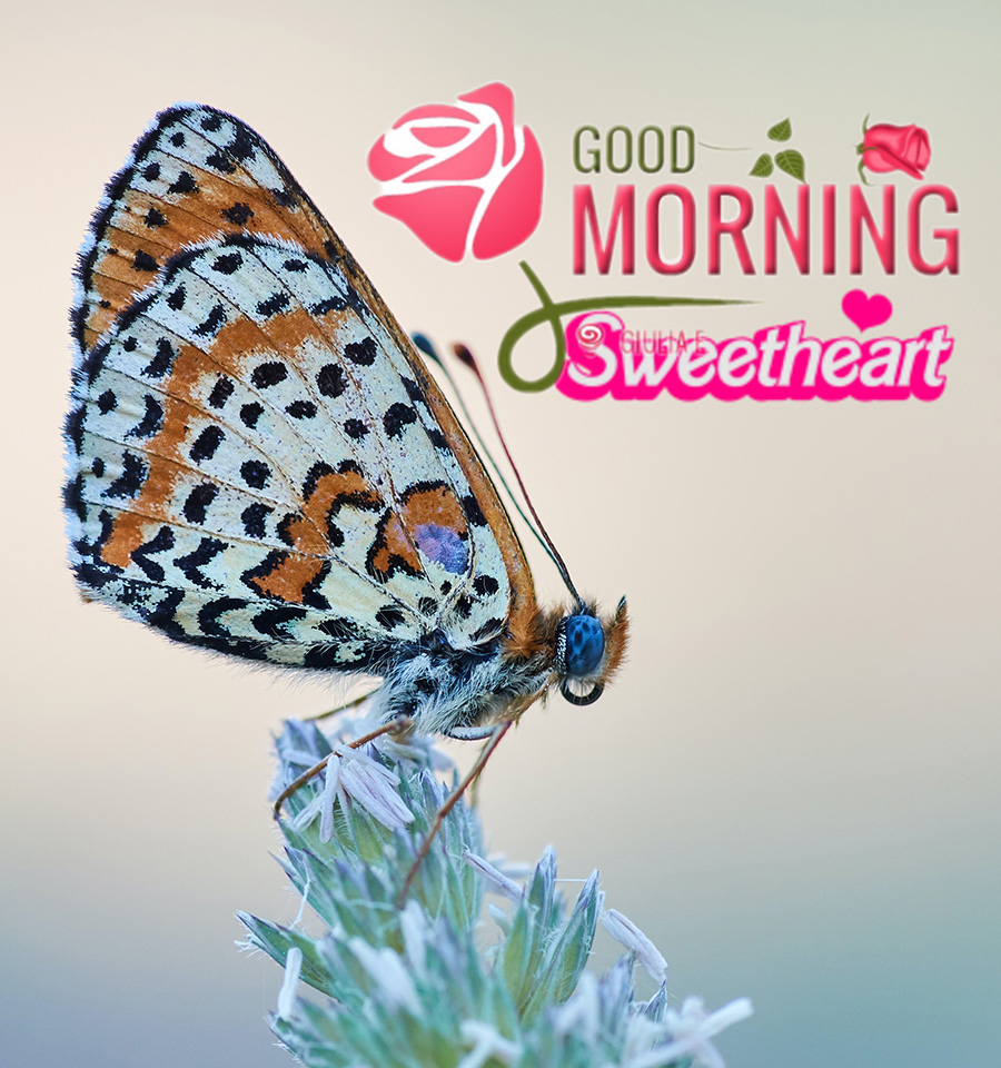 Good morning image with butterfly àn flower