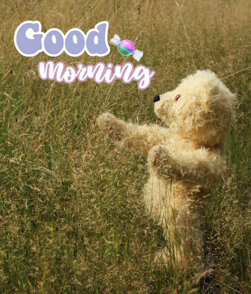 Good morning image with teddy bear playing in the meadow