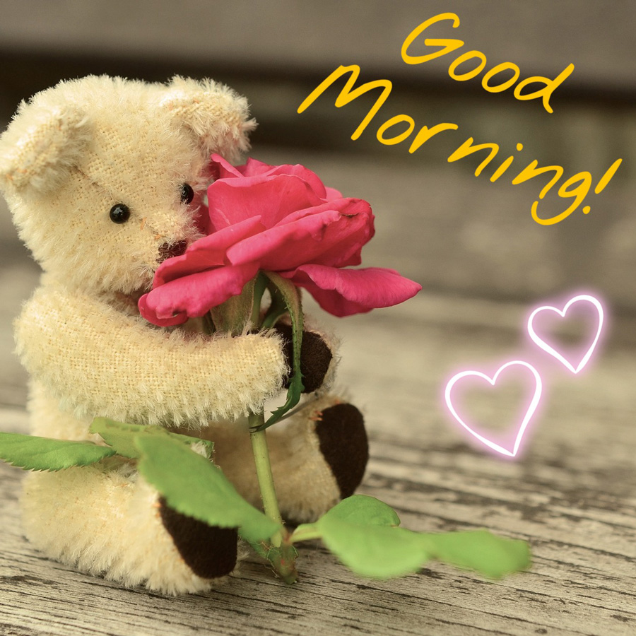 Good morning image with teddy bear and rose