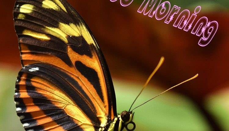 good-morning-with-beautiful-butterfly-2