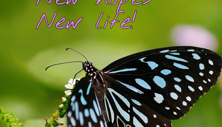 good-morning-with-beautiful-butterfly