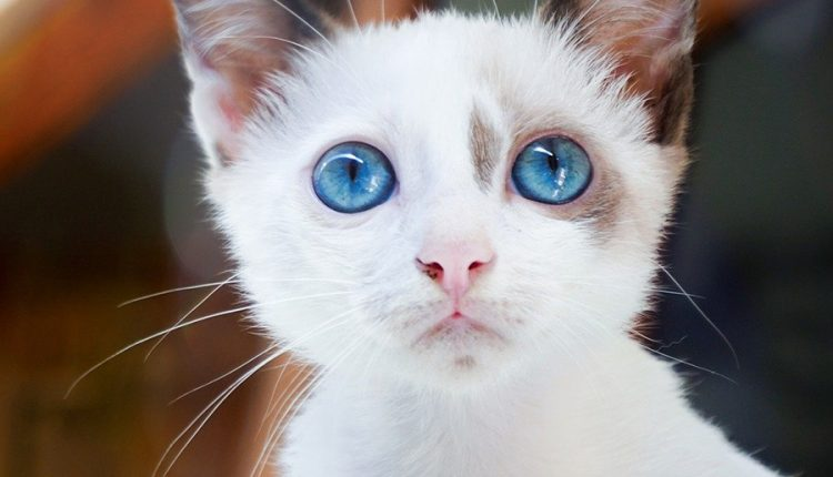 good-morning-with-beautiful-cat