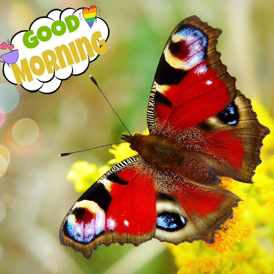 Good morning image with colorful butterfly