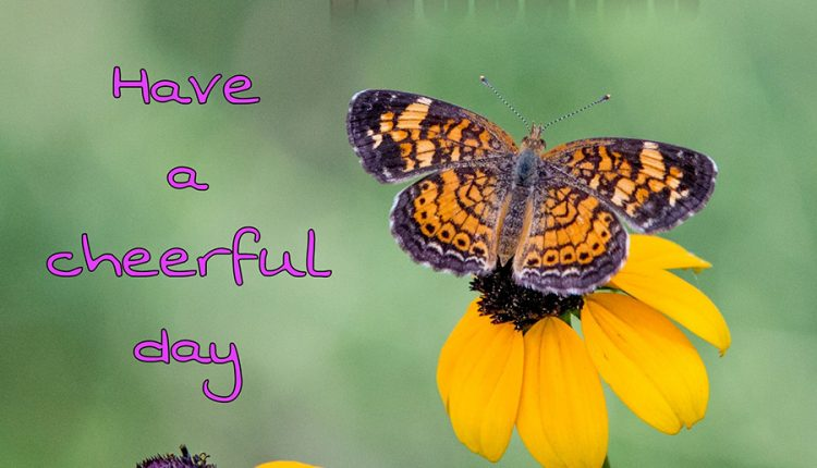 good-morning-with-colorful-butterfly