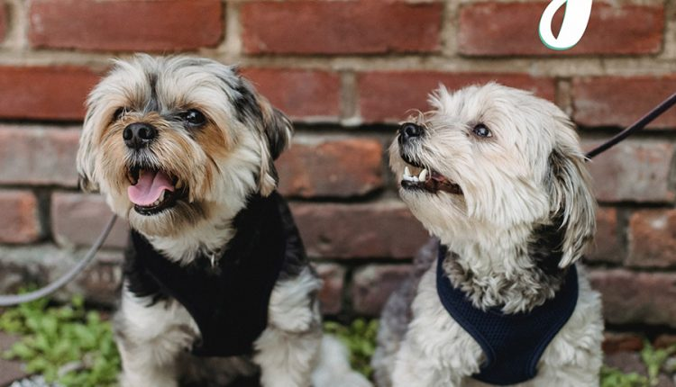 good-morning-with-cute-couple-dogs