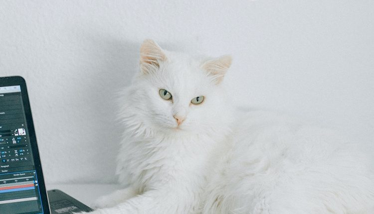 good-morning-with-white-cat