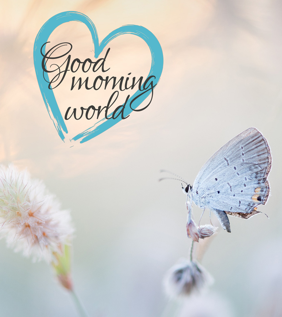 Good morning image with butterfly and heart