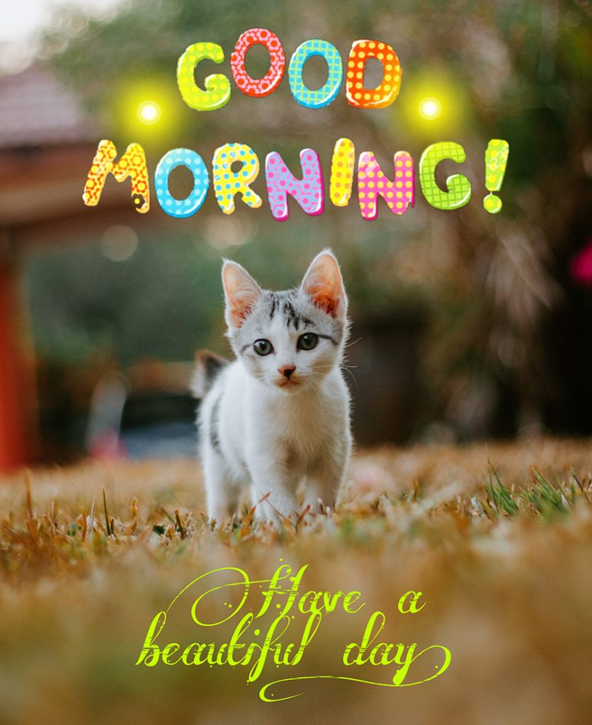 Good morning image with cute cat