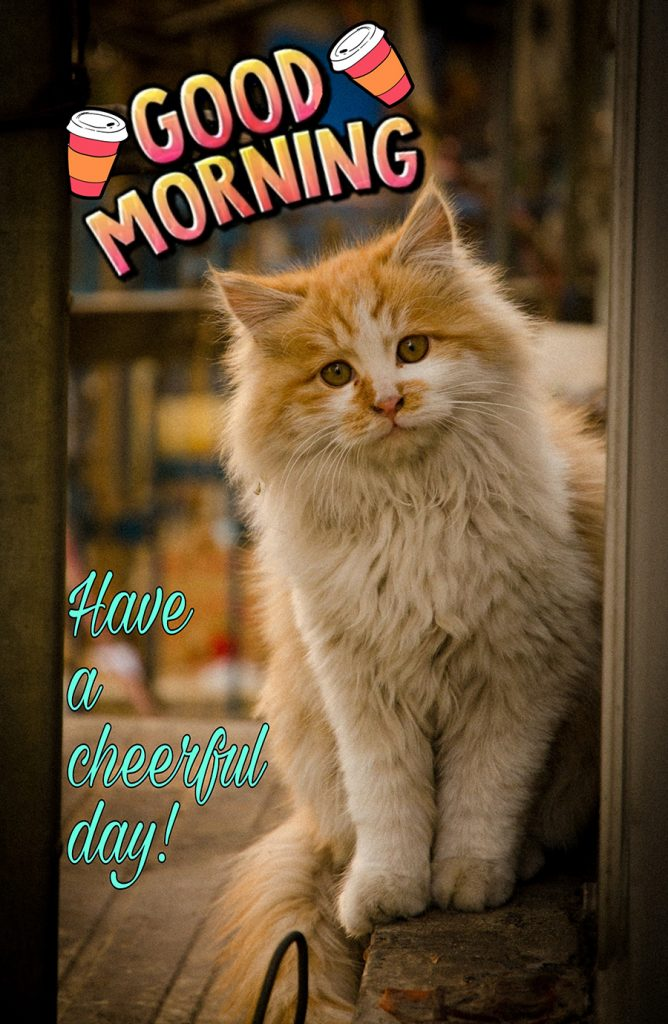 Good morning cat picture