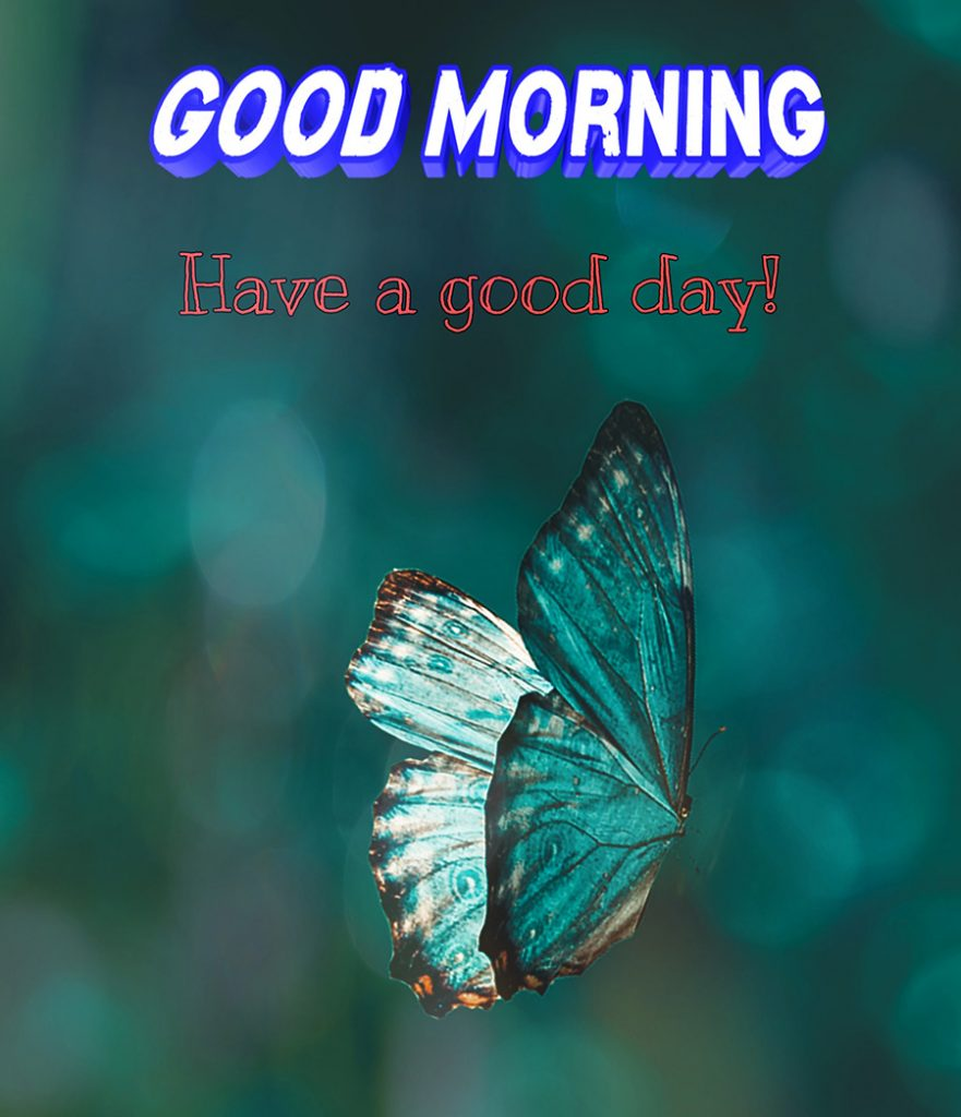 Good morning picture with Butterfly in turquoise background