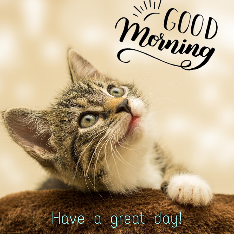 Good morning image with cat looking up