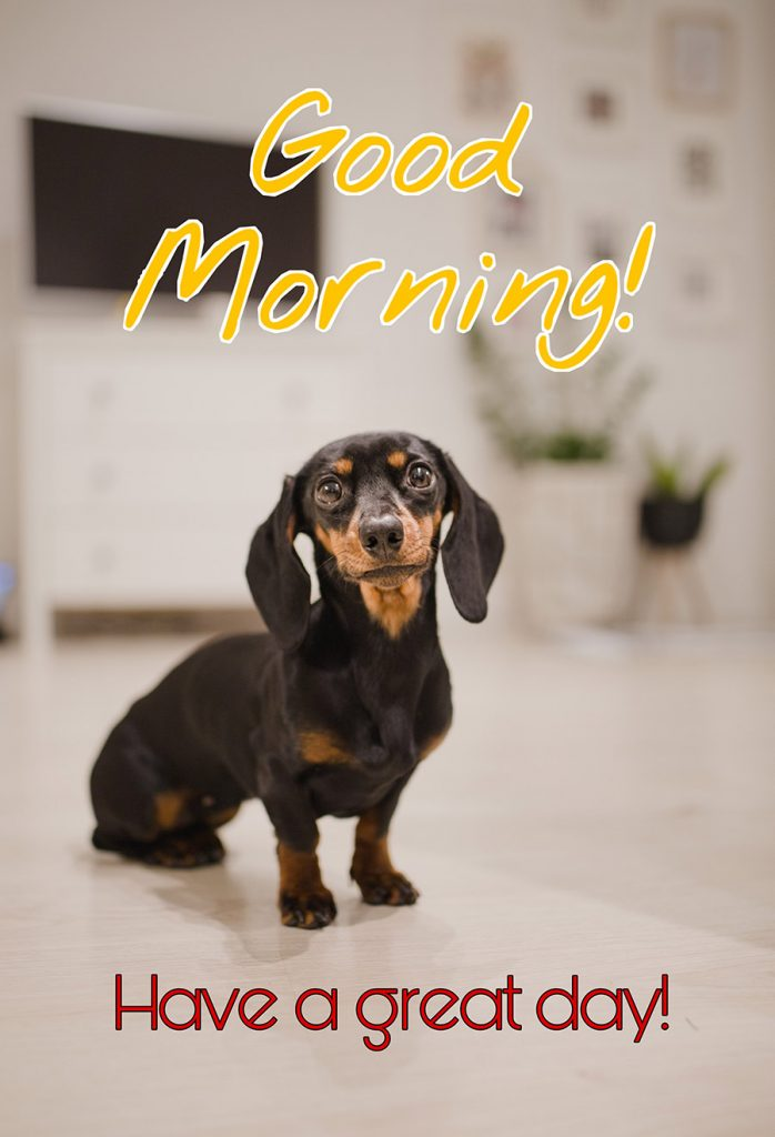 Good morning image with dachshund puppies