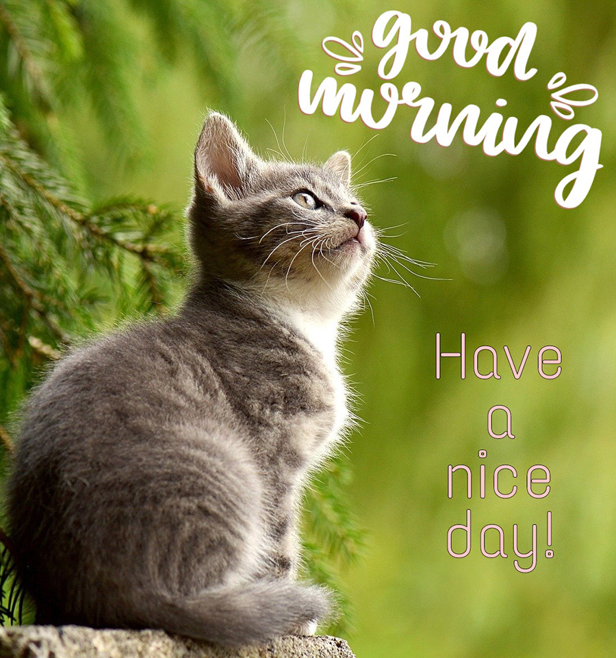 Good morning image with beautiful cat