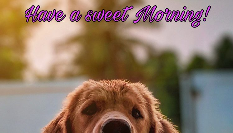 have-a-sweet-morning