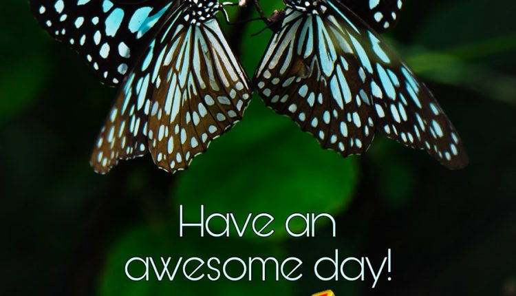 have-an-awesome-day-1