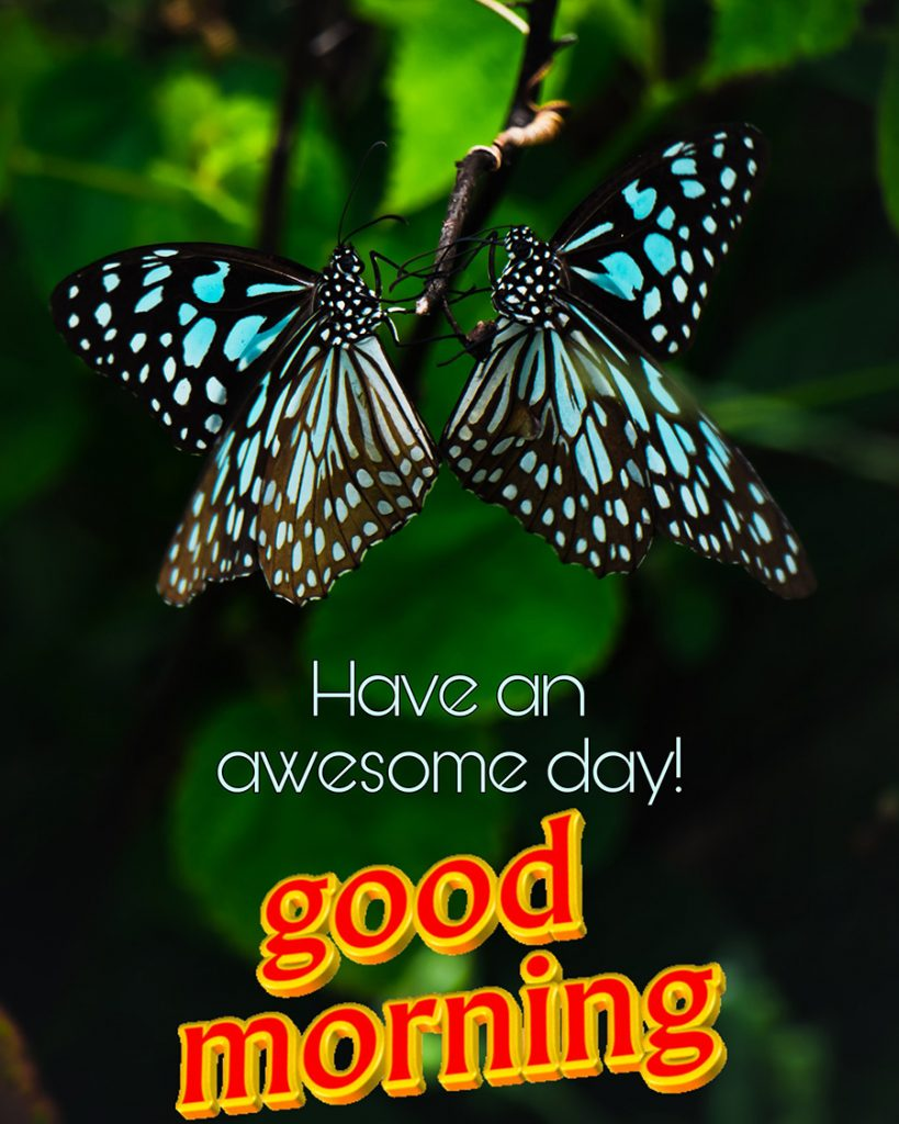 Good morning picture with beautiful butterflies