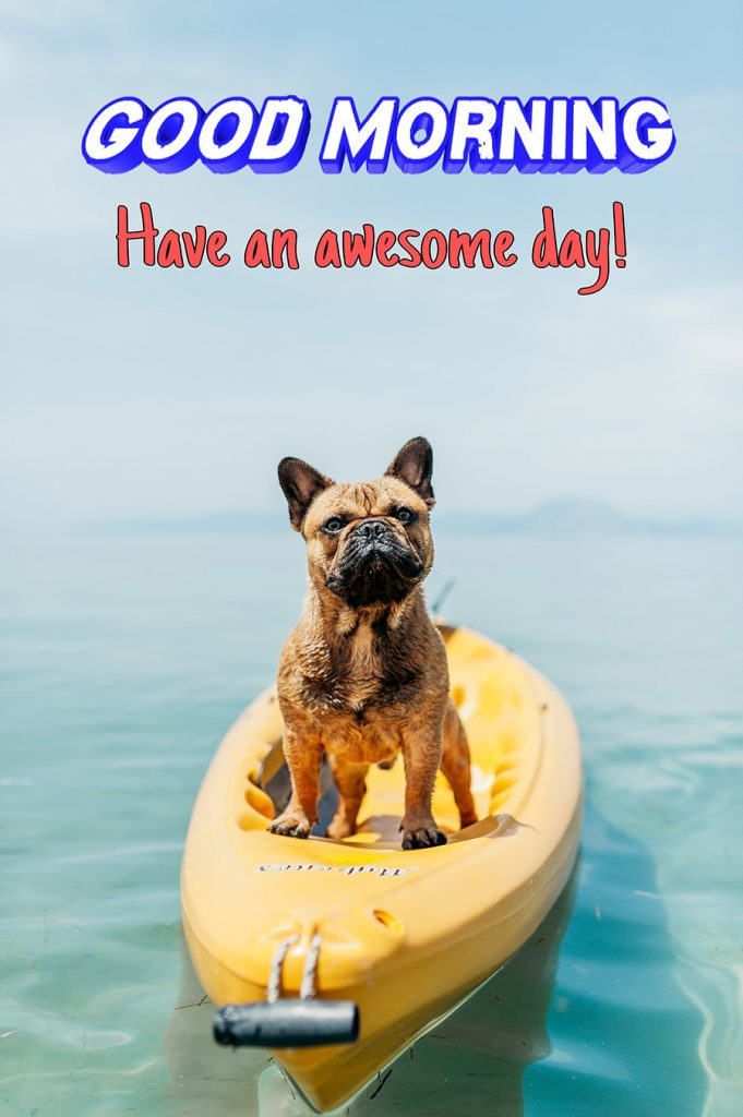 Good morning image with the dog is standing on the sup boat