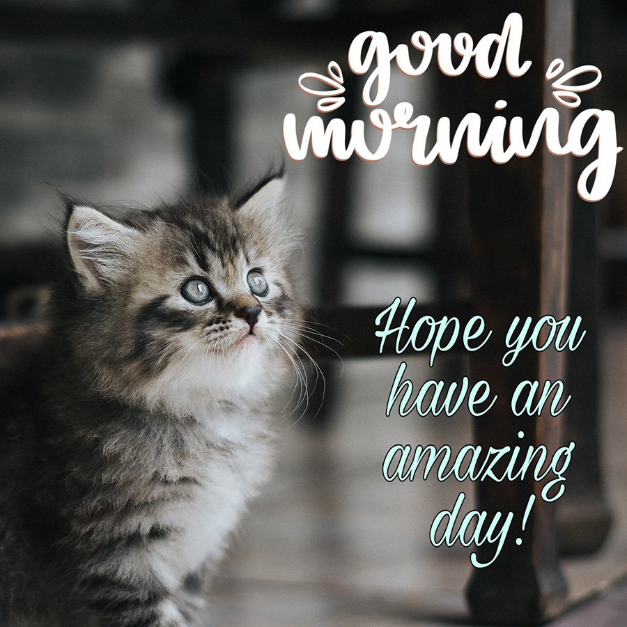 Good morning image with cat